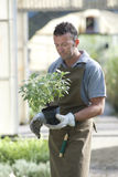 Gardener at work Stock Photography