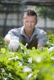Gardener at work Royalty Free Stock Images
