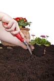 Gardener at work Royalty Free Stock Photos