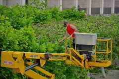Gardener at work , trees pruning with the aid of an industrial lift Royalty Free Stock Photos