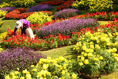 The gardener is working Royalty Free Stock Images