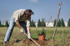 Gardener working in the garden Stock Photo