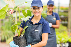 Gardener working nursery Stock Image