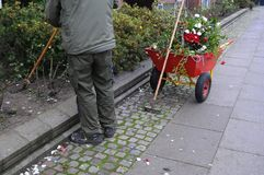 GARDENER WORKING WITH ROSE PLANTS stock images