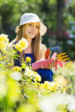 Gardener working in roses plant Stock Photos
