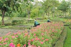 Gardener working Royalty Free Stock Photos