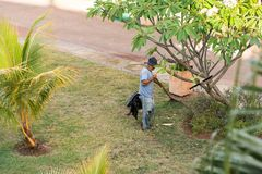 The gardener works in the garden, Varadero, Matanzas, Cuba. Copy space for text. Royalty Free Stock Image