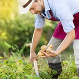 Gardener Royalty Free Stock Photos