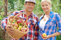 Gardeners with apples Royalty Free Stock Photos