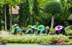 The Gardeners. BANGKOK, THAILAND - JUL 10 : Gardeners  floriculture on July 10, 2015 at Suanluang RAMA IX garden in Bangkok, Thailand Royalty Free Stock Photos