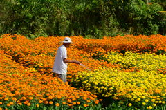 Gardeners care for the flowers in their garden Royalty Free Stock Images