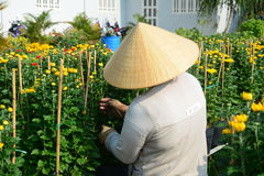 Gardeners care for the flowers in their garden Stock Images