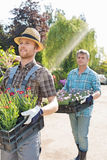 Gardeners carrying flower pots in crates at plant nursery Stock Image