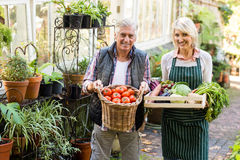 Gardeners carrying fresh vegetables outside greenhouse Stock Photography