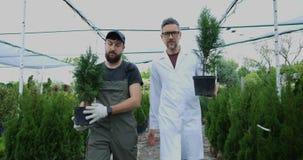 Gardeners carrying thujas. Medium shot of two gardeners carrying potted thujas in nursery garden stock video