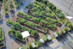 Gardeners and City Garden Plots. A high, wide angle perspective on gardeners tending to their city garden plots stock photos