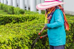 Gardeners cut branches. In thai Royalty Free Stock Images