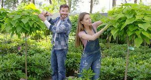 Gardeners cutting leaves from plants. Male and female professional gardeners cutting leaves while taking care of plants in the garden stock footage