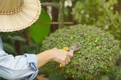 The gardeners are cutting trees. royalty free stock photo