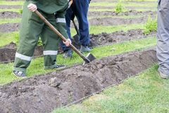 Gardeners dig up the ground on a bed with a shovel, gardening. Gardeners dig up the ground on the bed with a shovel, gardening, people at work Royalty Free Stock Photos