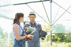 Gardeners discussing over flower pots at greenhouse Stock Images