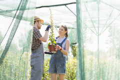 Gardeners discussing over potted plant at greenhouse Stock Image