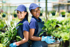 Gardeners in greenhouse. Two happy gardeners portrait in greenhouse Stock Photography