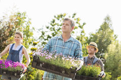 Gardeners looking away while carrying crates with flower pots at garden Stock Image