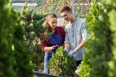 Gardeners in the nursery-garden on a warm sunny day. Girl and guy are looking on thr plant in the pot in the nursery royalty free stock photography
