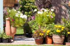 Gardeners paradise growing plants and flowers Royalty Free Stock Image