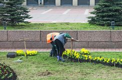 The gardeners planting flowers. The gardeners planting flowers in the city Stock Images