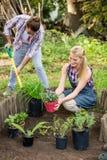 Gardeners planting at garden Royalty Free Stock Photos