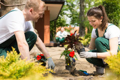Gardeners planting red flowers Royalty Free Stock Image