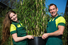 Gardeners posing with bamboo plant at nursery Royalty Free Stock Image
