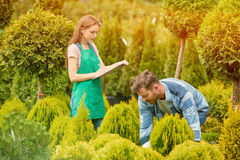 Gardeners with potted tree Royalty Free Stock Photography
