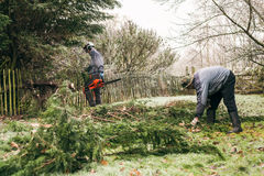 Gardeners pruning tree. Professional gardeners pruning trees in the garden Stock Photography