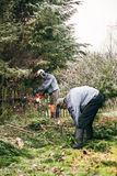 Gardeners pruning tree. Professional gardeners pruning trees in the garden Stock Image