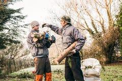 Gardeners pruning trees Royalty Free Stock Image
