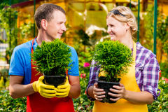 Gardeners with seedlings in their hands look at each other. In the nursery Royalty Free Stock Images