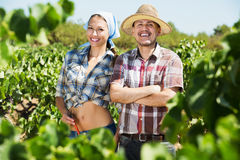 Gardeners standing among grapes trees Stock Photography