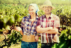 Gardeners standing among grapes trees Stock Photos