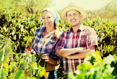 Gardeners standing among grapes trees Royalty Free Stock Photos