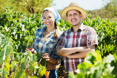Gardeners standing among grapes trees Royalty Free Stock Photo