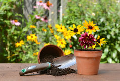 Gardeners table with flowers Royalty Free Stock Images