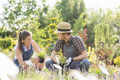 Gardeners talking while gardening at plant nursery Stock Images