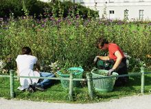 Gardeners tend to the flower beds outside Nymphenburg Palace. Two gardeners weed the flower beds outside of the beautiful and famous tourist destination of stock photo