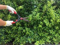 Free Gardeners Trim Trees And Grass For Neatness. Stock Photos - 123381433