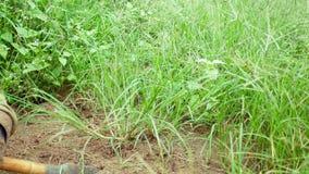 Gardeners use grass mowers. Gardeners use grass mower in garden stock video footage