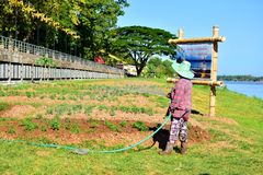 Gardeners - watering the trees Of Thai farmers. Gardeners - watering the trees Of Thai farmers, garden care, watering Stock Photos