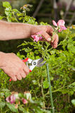 Gardeners work Stock Images